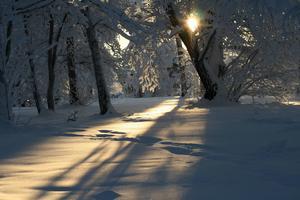 Drömmen om en vit jul lever.