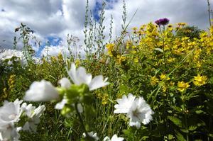 Frodig. Blommor lyser upp stenbumlingar och trädstammar. Foto:Mikaela Larm