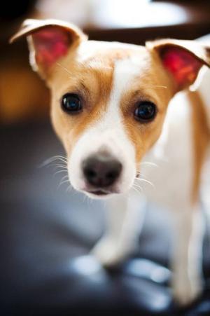 Skulle du vilja att det gjordes tester på ditt älsklingsdjur?foto: scanpix