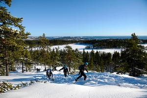 Traillöpning har blivit allt populärare – även vintertid. Ett av de tuffaste loppen är Höga kusten winter trail som arrangerades för första gången förra vintern.