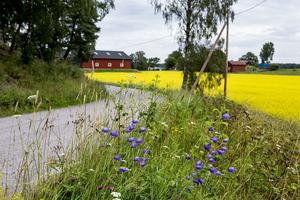 Hela Sverige måste få leva, skriver skribenten.
