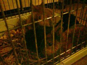 De tre kaninerna fick bo hos polisens ledningscentral under natten mot tisdagen.