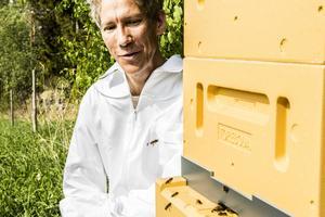 Pedro har två typer av bikupor, men den typ som syns här, som byggs på höjden är den han planerar att satsa på framöver.