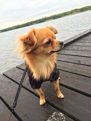 Zack sitter på bryggan i regnet.