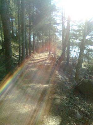 Hitta skog att andas i, tipsar Fanny Wedmark. Fotograf: Malin Valsås