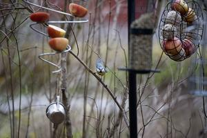 En varierad meny ökar chansen att många olika slags fåglar kommer till trädgården.