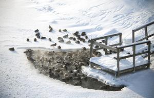 De närmsta dagarna kommer det att huttras en del i Ångermanland. Ner till 25 minusgrader väntas lokalt i inlandet.