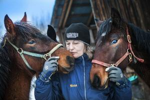 Mona och Hans har flera ettåriga unghästar.