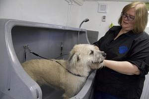 investering. Hundbadet är den största investeringen Malin gjort till sin hundfrisersalong.