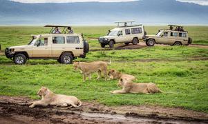 Safari i Ngorongoro Nationalpark.   Foto: Shutterstock.com