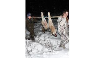 Max två vargrevir räcker i Dalarna, säger Socialdemokraterna. Bilden är från vargjakten väster om Siljansnäs 2010. MATS RÖNNBLAD