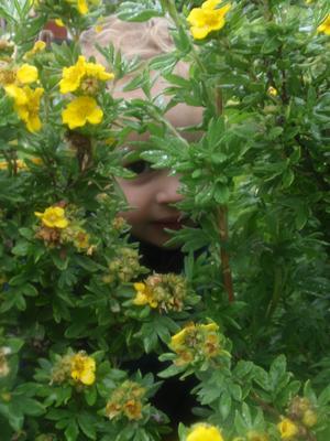 leker tittut bakom blommorna