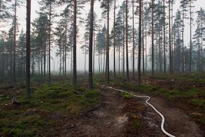 Räddningstjänsten tvingades lägga ut flera kilometer slang för att släcka branden i Trönö.