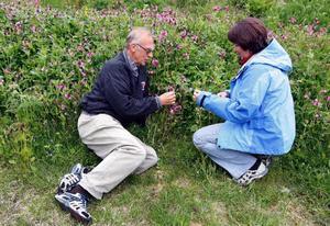 Hans Tingman och Rut Magnusson berättar att det hittills varit 40000 besökare på fjället som kommit hit för den unika floran i området.