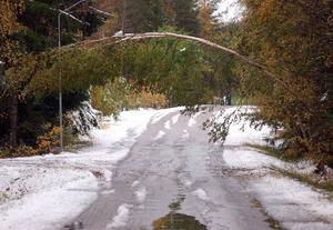 Den tunga blötsnön ställde till med problem i Härjedalen under lördagen med bl.a. strömavbrott. Många träd höll inte för blötsnön utan blev hängande som en portal över vägarna.