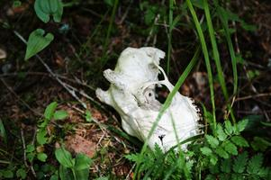 Under skattjakten går även andra fynd att hitta. Till exempel ett djurskelett.