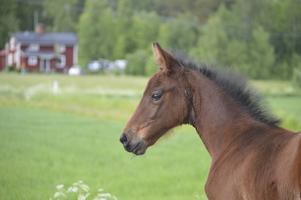 Fölet Rosé föddes i maj.