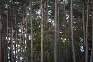 Skogspolitiken är helt enkelt för viktig och komplex för att hanteras i Bryssel, därför kommer vi att fortsätta kampen för att skogspolitiken även i framtiden ska styras så nära skogsägarna som möjligt, skriver Eva-Lena Blom och Kristina Yngwe, centerpartister och kandidater till EU-parlamentsvalet.