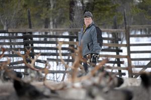 Benny Jonsson är bekymrad för att renar tjuvskjutits, arkivbild.