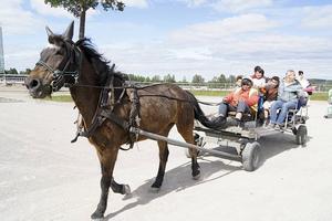 Många besökte dagen och deltog i de olika aktiviteterna.   Lars-Erik Nordlander hade inga problem att få långvagnen full när han körde runt på stallbacken.