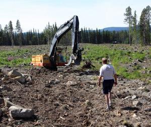En grävmaskin tar bort stubbarna.