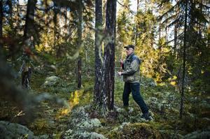 Med hjälp av en borr och trädens årsringar går det att följa brandfrekvensen.