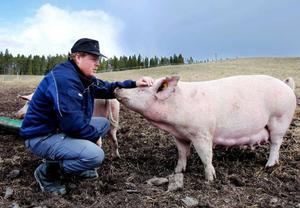 """Sociala genier. Det vore konstigt om inte Gustaphssons grisar vore glada, så bra som de har det. """"Lägger du ned lika mycket tid på en gris som på en hund kommer du längre"""", säger Magnus."""