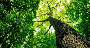 Att plantera träd kan vara ett sätt att klimatkompensera.