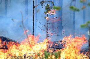 Det är torrt just nu i länets skogar och marker, något som leder till en ökad risk för skogsbränder. Räddningstjänsten fick under måndagen rycka ut till flera misstänka bränder.