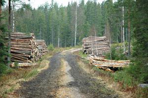 Timmer och energi. Stora Enso vill bli bättre på att ta vara på spillprodukter efter skogsavverkning.