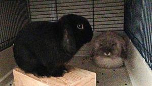 Kaninerna får nu sova i polishuset.