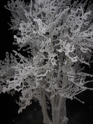 Träd, lurvigt av snön. Taget i Strömsund.