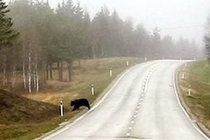 Björnen.