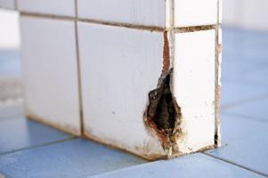 Mögel och andra sanitära olägenheter. Så här ser det ut i herrarnas dusch i polishuset i Falun.