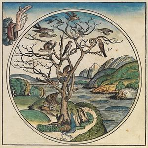 Vid skapelsens femte dag ger Gud liv åt fåglarna och djuren i vattnet.