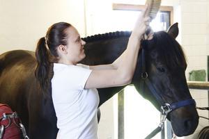 Clara Strandberg Zarotti borstar Carpe Diem. Hon har sin knep  när det gäller att få en häst fin.