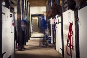 Vi får gå in i stallet vid Hovgården. Det är en kuslig känsla, men vi ser inte till några spöken. På det mörka och kalla stalloftet är det riktigt läskigt.