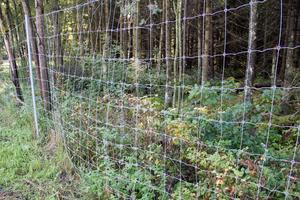 Viltstängslet vid Råby rastplats är lagat på flera ställen och det ser ut som att det har bott folk i skogen bakom stängslet.