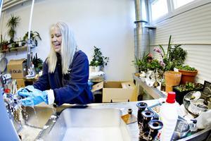 Monica Pederson jobbar som sanerare på Ocab i Gävle. Här rengör hon brandskadade föremål från radhusen i Hemlingby som eldhärjades i slutet av mars.