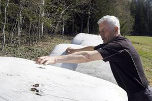 Lennart Lindberg kunde konstatera att björnen hann riva hål på nio ensilagebalar.