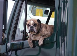 En hund på 30 kilo förvandlas till en 3 840 kilo tung klump vid en krock i 90 kilometer i timmen.
