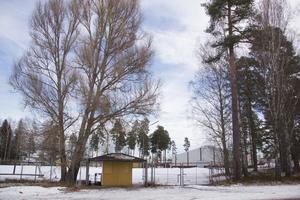 Runt 14.15 ska en kvinna har blivit sexuellt ofredad i närheten av Klockarvallen i Skogsbo.