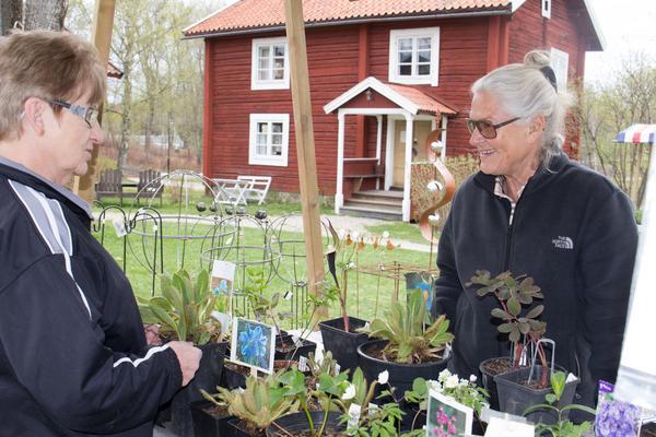 Ulla Eriksson  vill få fler att våga odla annorlunda och mer krävande växter. Kunde Ann-Marie Larsson är redan inbiten.
