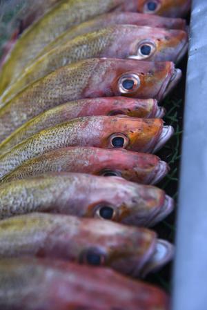 Färsk fisk redo för kvällens grillning i El Nido.   Foto: Anders Pihl