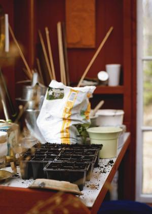 Vissa växter måste förkultiveras för att hinna upp innan säsongen är över.