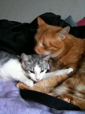 Elza och Zimba är bra kompisar. De brukar tvätta varandra och sova tillsammans.