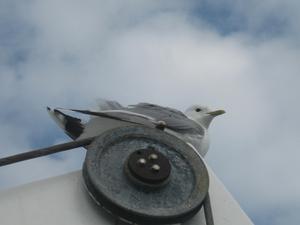 Lyckades få en bra bild på en fiskmås uppe på däck närjag o min kille Thomas var på dagskryssning till Mariehamn i somras.