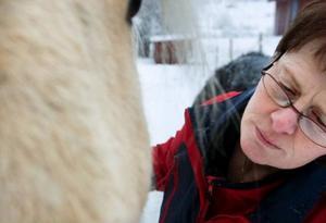 Margaretha Andersson söker efter punkter att behandla på hästen Kristallen.