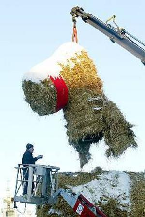 Foto: LASSE HALVARSSON Bocken överlevde julen. I går monterades den ned helskinnad.
