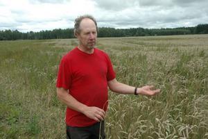 SKAPLIGT. Snart ska Peter Mattsson börja skörda höstvete. Men först måste marken torka efter det senaste regnet. Höstvetet ser skapligt ut, sämre var det med vårsådden på gården.